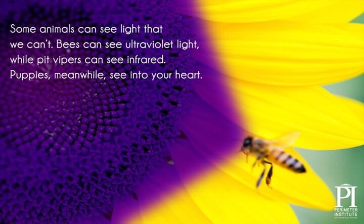 as cores que os animais veem na luz