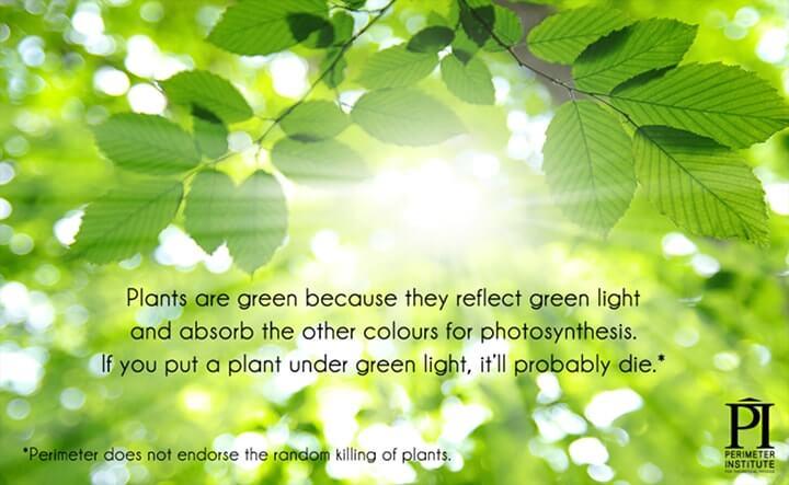 luz para fotossíntese
