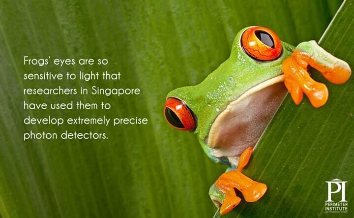 olhos dos sapos são sensíveis à luz