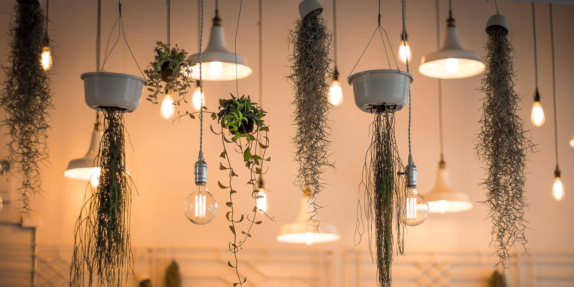 Iluminação e plantas